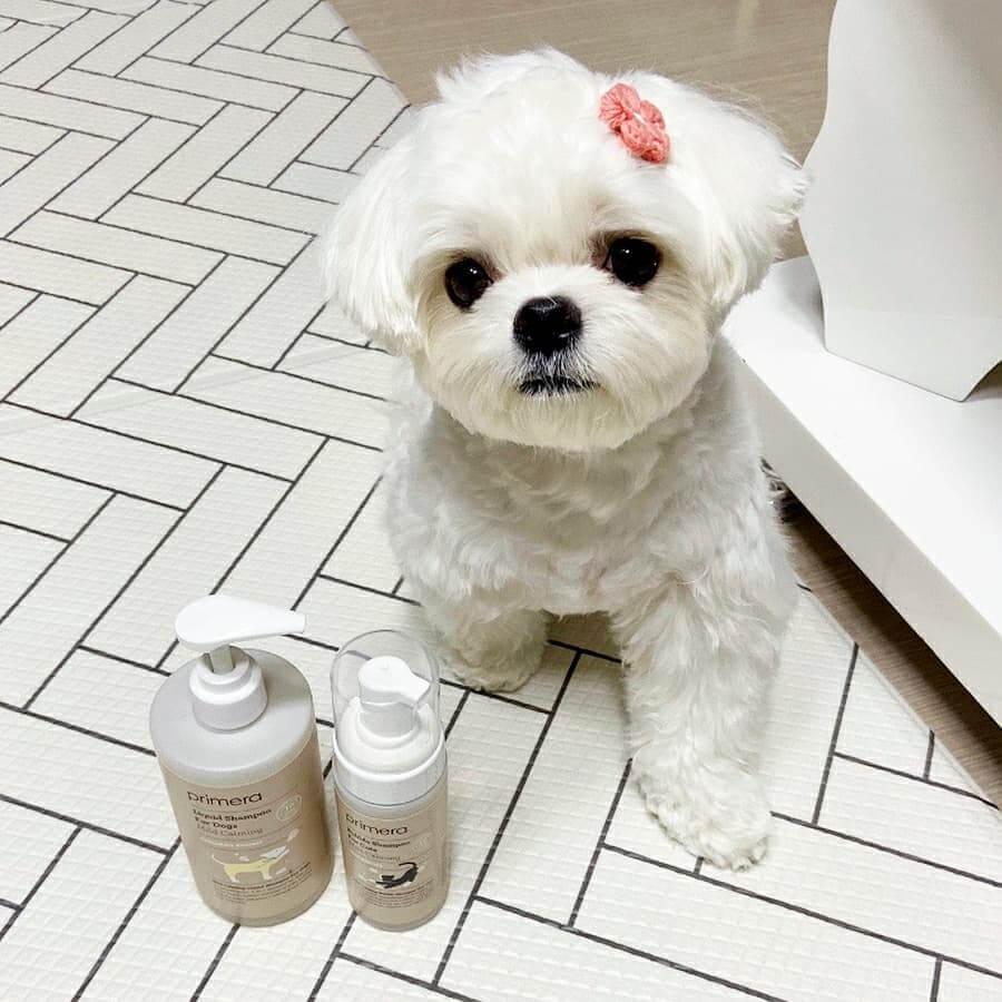 Primera 狗狗沖涼液